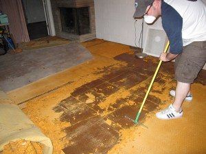 Rug Pad Cleaning Industry